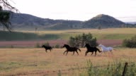 Horses Galloping Through A Field video