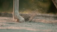 SLO MO DS Horse's hooves lifting sand video