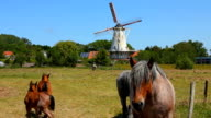 Horses in front of windmill - Netherlands video