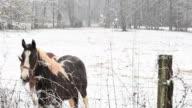 Horses In Snow video