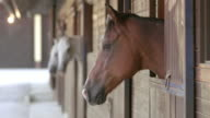 DS Horses looking out of the stable opening video