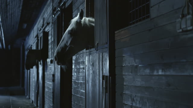 DS Horses looking through stable box opening at night video