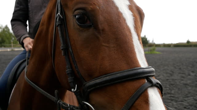 Horses muzzle or head with bridle close up. Face of brown stallion and eye in closeup with mane detail. Jockey riding sitting. Slow motion video