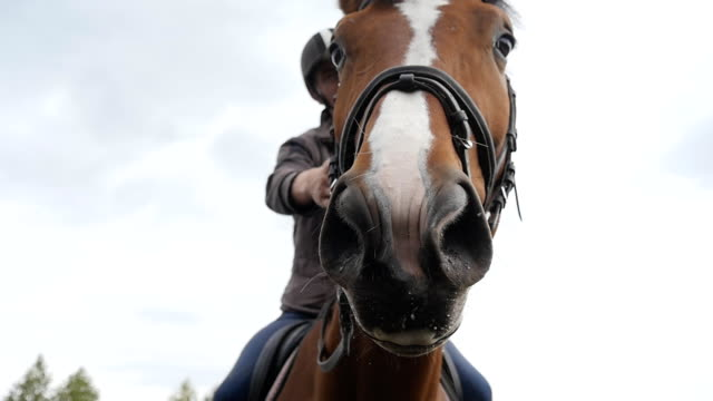 Horses muzzle or head with bridle close up. Face of brown stallion and eye in closeup with mane detail. Jockey riding sitting top and strokes the neck of animal. Slow motion video
