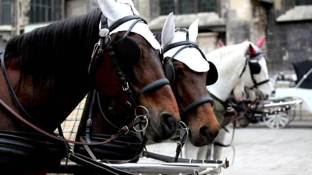 horses of Fiaker, Vienna video