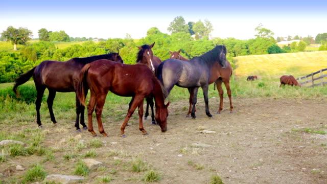 Horses on a farm video