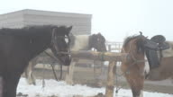 Horses on the farm at the hitching post, in the winter in heavy fog. video