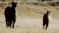 Horses run passed camera in meadow video