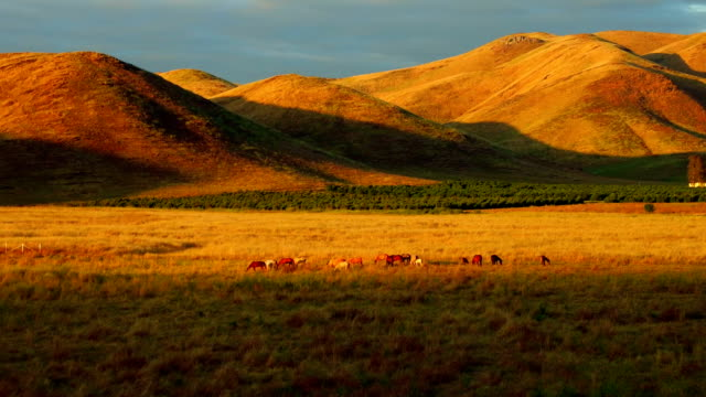 Horses Running Farm With Mountains Sun Set Wild Life Animals Aerial View Wide Angle video