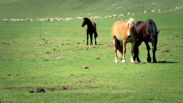 Horses Running in Slowmotion Video video