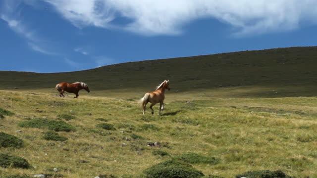 Horses running on Dolomites Landscape video
