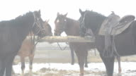 Horses tethered to the hitching post in the winter in heavy fog. video