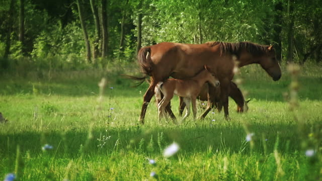 Horses video