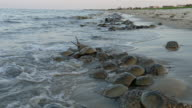 Horseshoe crabs spawn high tide Slaughter Beach Delaware Bay waves video