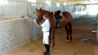 Horsewoman And Horse video