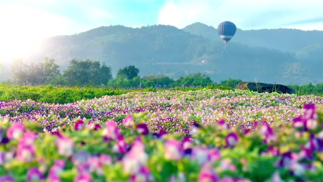 Hot Air Balloon on flower field video