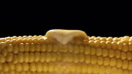 Hot Corn video