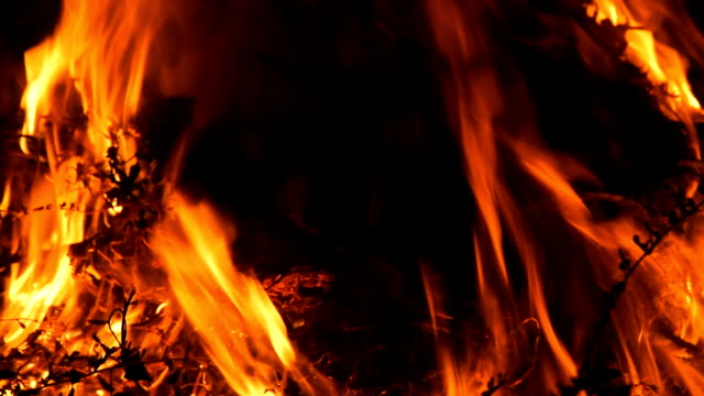 Hot fireplace full of wood video