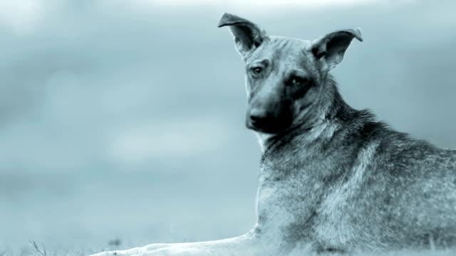 Hound Dog video