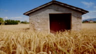 House on a wheat field video