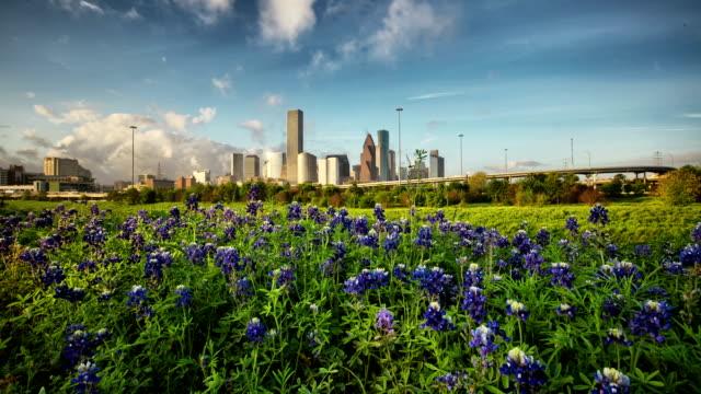 Houston Bluebonnets video