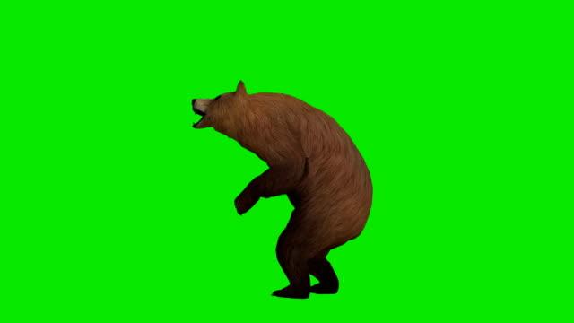 Howling Bear Green Screen (Loopable) video