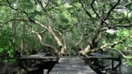 A huge mangrove field of Thung Prong Thong forest in Rayong at Thailand video