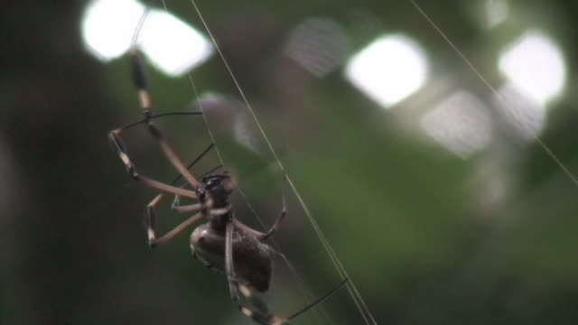 Huge spider in the rain forest video
