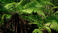 Huge Tropical Ferns In The Sun video