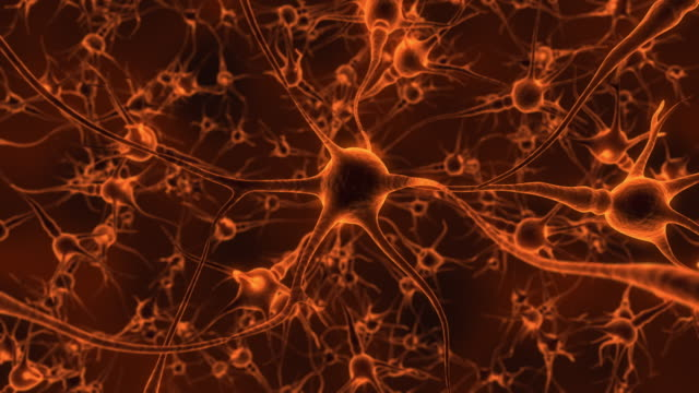 Humain Brain And Neurons video