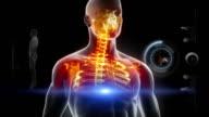 Human body full scan video