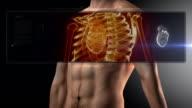 Human body heart scan video