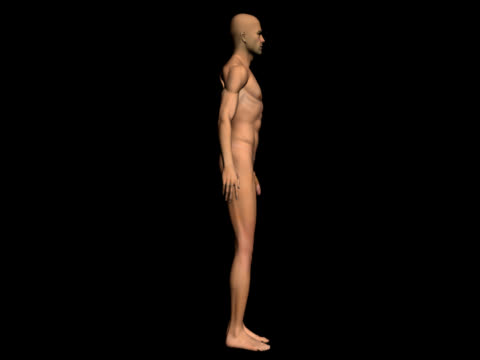 Human body of a realistic man for study - Spinning video