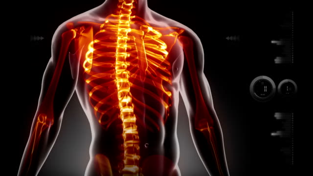 Human body science scan video