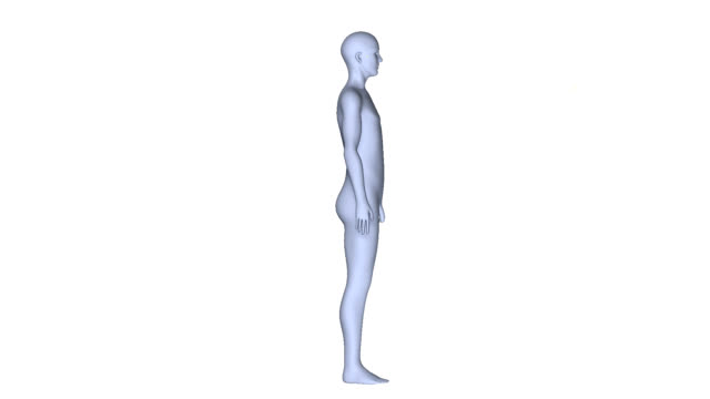 Human body video