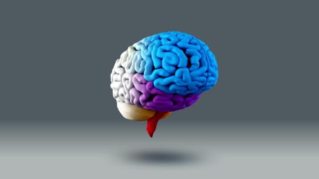 Human Brain Loop video