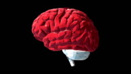 Human Brain Low Poly with Alpha channel video