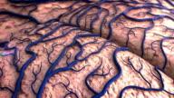 human Brain Model video