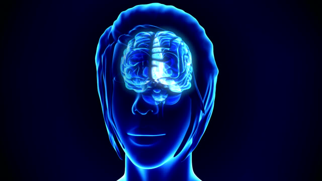 Human Brain video