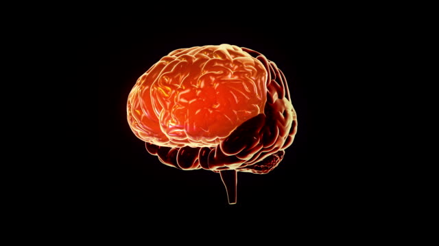 Human brain with regions lighting up. Synapsis. Loopable. Biology. Orange. video