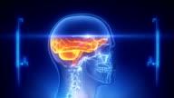 Human brain x-ray scan video