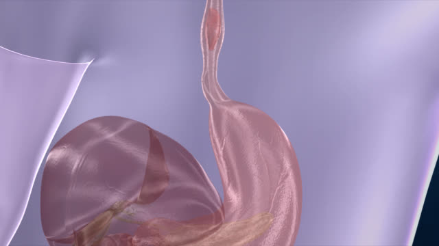 Human Digestive System video