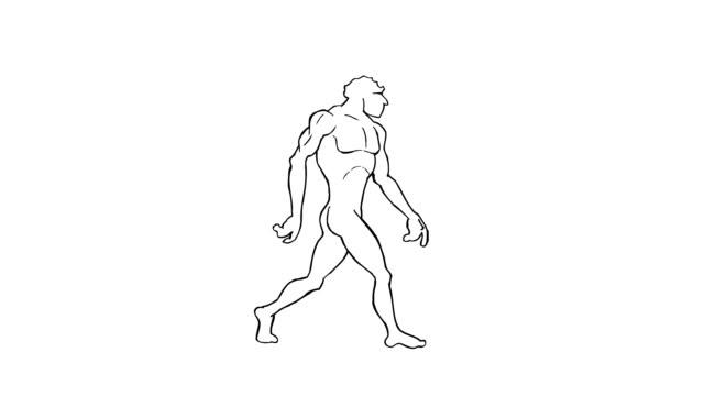Human evolution. Morph. Loopable. Alpha matte. video