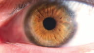 Human eye ball with dilating pupil. Detailed eyeball video