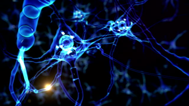Human head and brain with neurons flashing. Synapsis. Loopable. Biology. video
