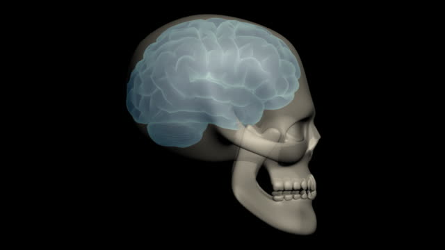 Human head with brain and skull video