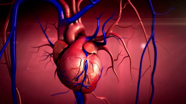 Human Heart Anatomy video