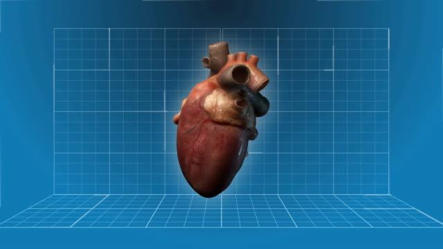 Human Heart beating - 360 turnaround video