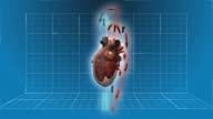 Human Heart beating - 360 turnaround with circulation video