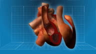 Human Heart beating - cutaway animation video